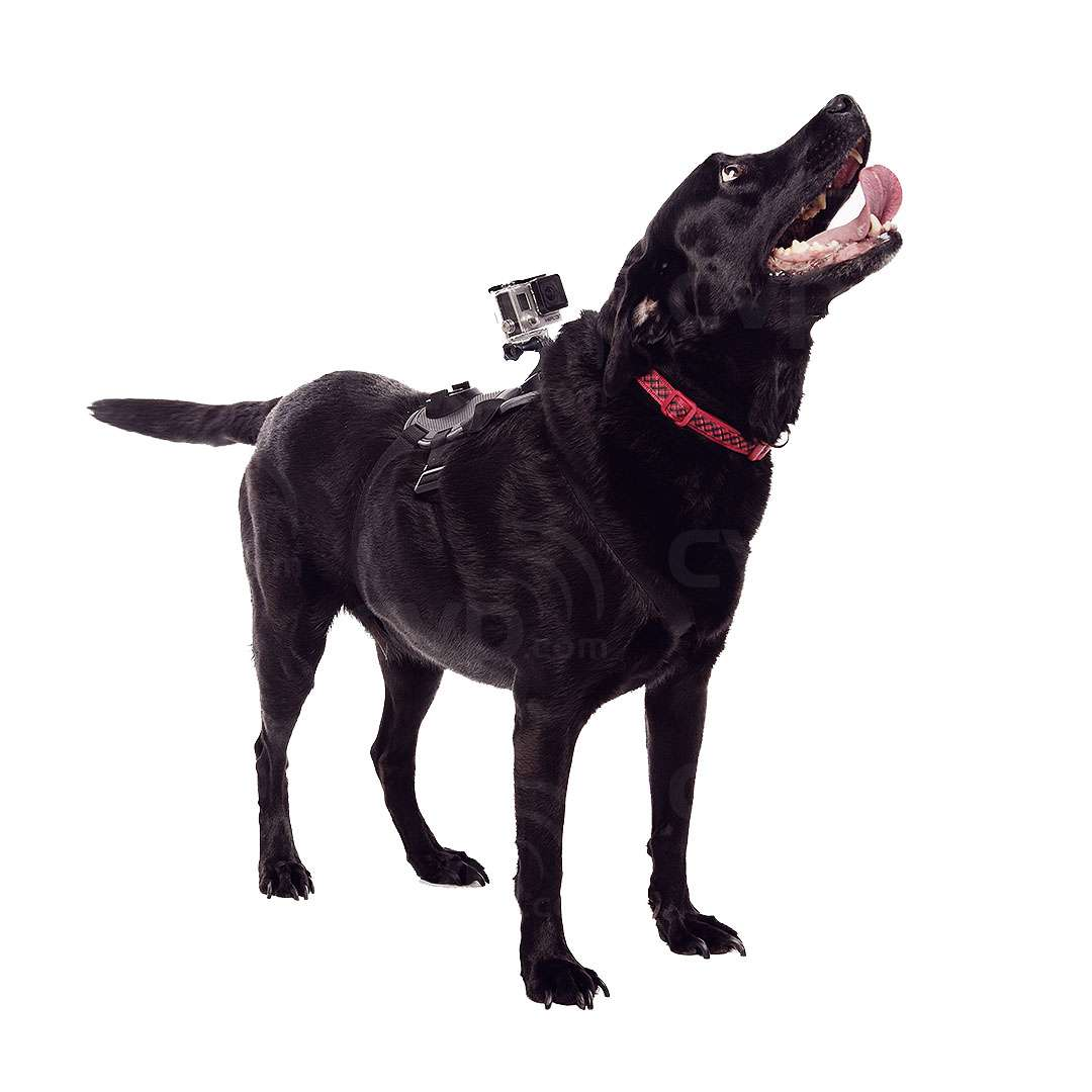 GoPro Fetch Dog Harness Compatible with all GoPro Cameras (GP2038)