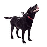 GoPro (ADOGM-001) Fetch Dog Harness compatible with HERO4, HERO3+, HERO3, HERO, HD HERO2, Original HD HERO (Was GP2038)
